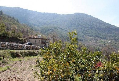Agricultural land for sale in Gazipasa - Antalya - Turkey alanya